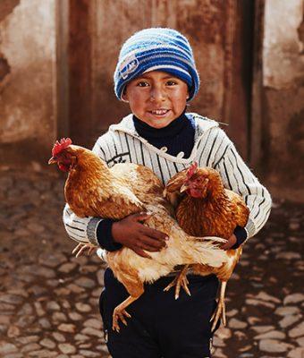 Boliviaanse jongen houdt 2 kippen vast